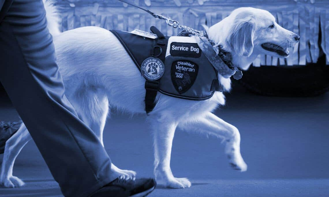 service dog training nc