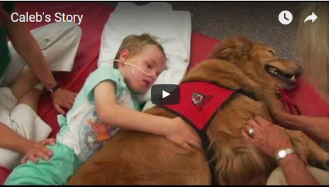 Great Therapy Dog Story!