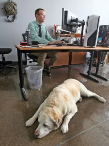 service dog at work with employee