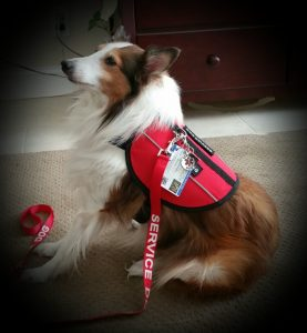 service dog vest and id card