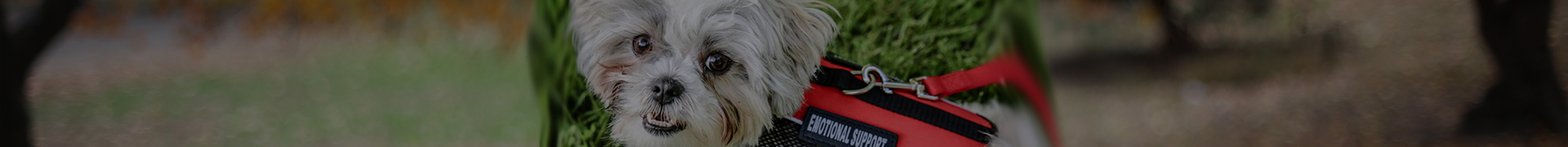 Emotional Support Animal Laws |