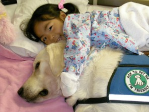 therapy dog banner