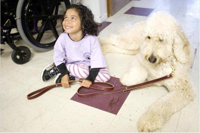 Scotus to Hear Case Regarding Service Dog Being Allowed in School