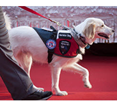 Service Dog Registration Emotional Support Animal Registration Service