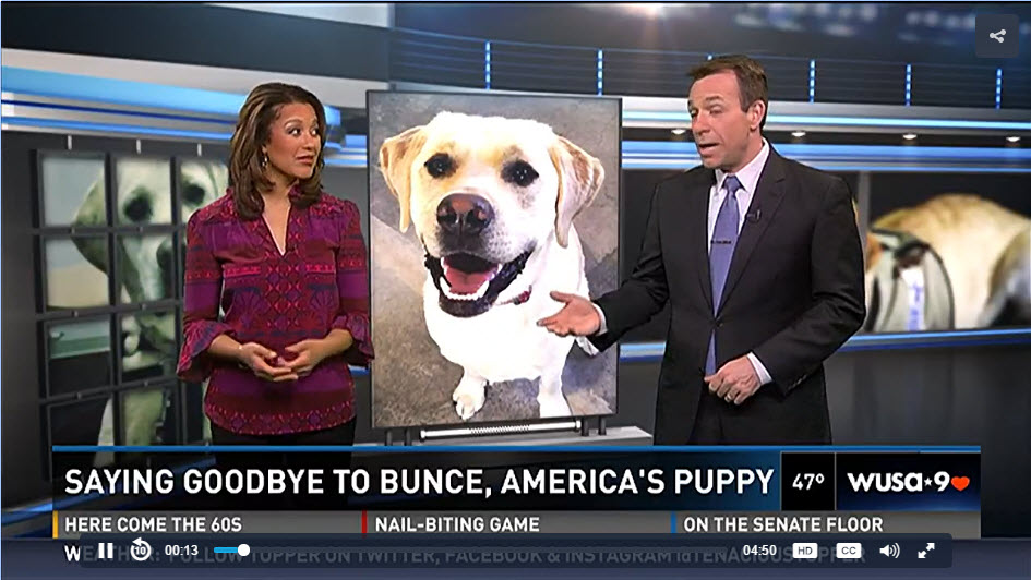 News Anchor Trains Service Dog for  Wounded Warriors