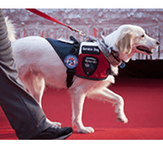Etiquette When Approaching Service Dog