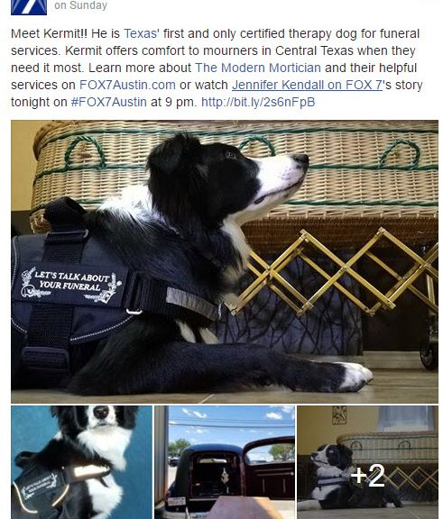 Requirements For Service Dog In Texas