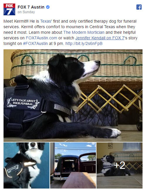 Image of: Custom But Funeral Home In Austin Texas Has Discovered How Comforting Therapy Dog Can Be To Grieving Family And Friends Kermit Border Collie Usa Service Dog Registration Funeral Home Now Has Comfort Dog To Assist The Grieving Service