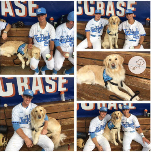 Image of: Ingham County Service Dog Helps Nc Baseball Team Best Lifestyle Buzz Service Dog Helps Nc Baseball Team Service Dog And Emotional