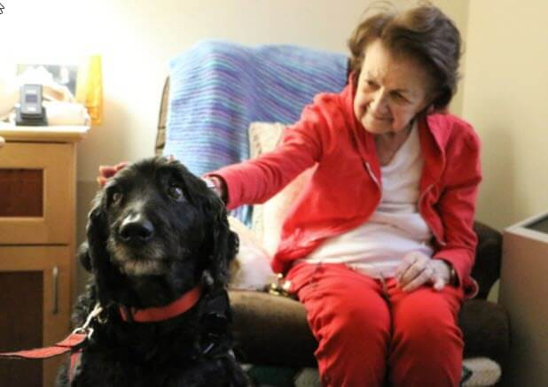 Baxter the Emotional Support Dog Brightening Seniors Days