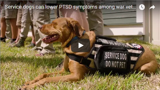 Purdue Study Demonstrates Benefits of Service Animals for PTSD