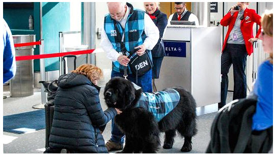 Airports welcome the help of support dogs horses and cats for Can service dogs fly in cabin