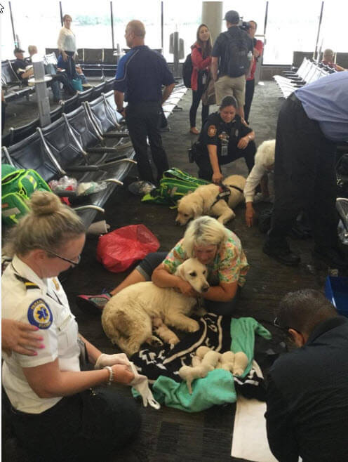 USA Service Dog Has Pups at Airport