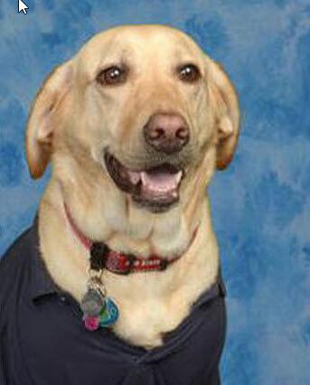 Linda The Service Dog Graduates
