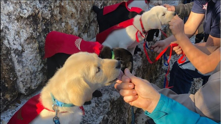 Students Meet Service Dog Pups They Will Be Training