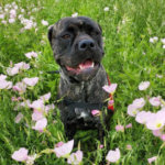 Mississippi Service Dog Laws and Certification 