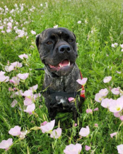 Service Dog and Emotional Support Animal News