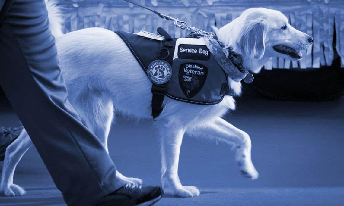 USA Service Dog Main Banner