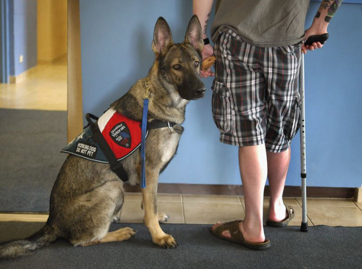 Most Common Conditions a Service Dog Can Help With