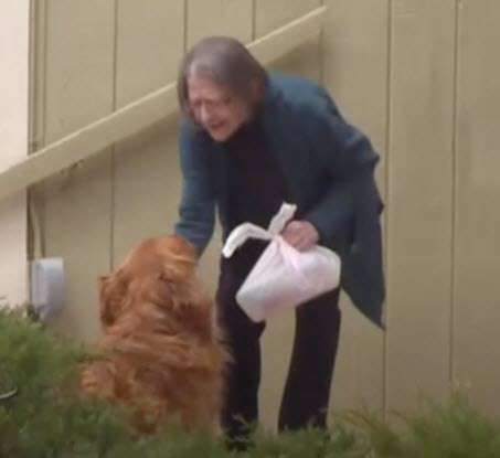 Quarantined Neighbors Dog Deliver Foods to Elderly Neighbor