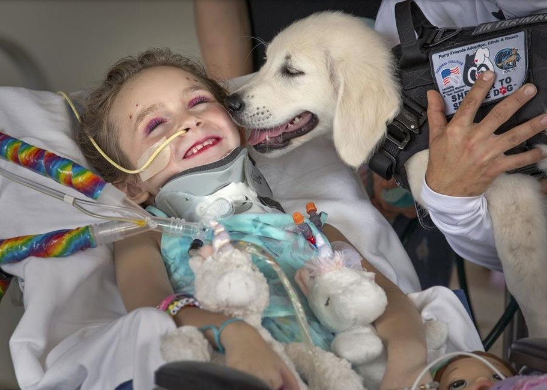 paralyzed girl meets her new service dog